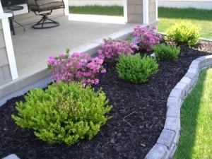 Landscape plants