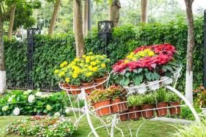 garden-721935_960_720